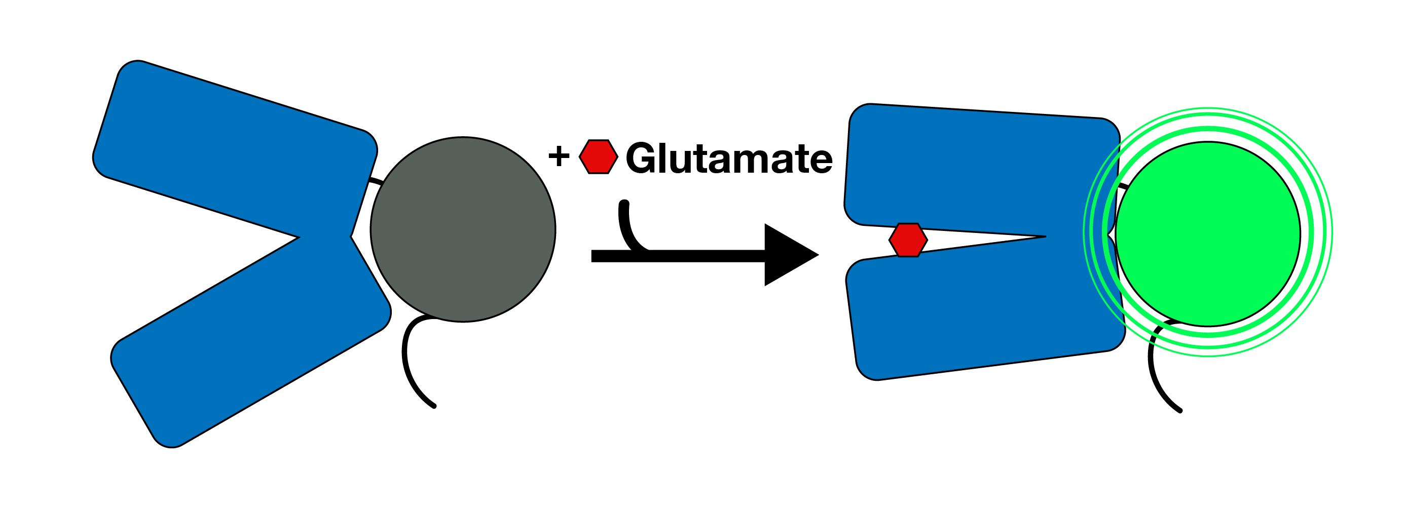 iGluSnFr Diagram-01.png