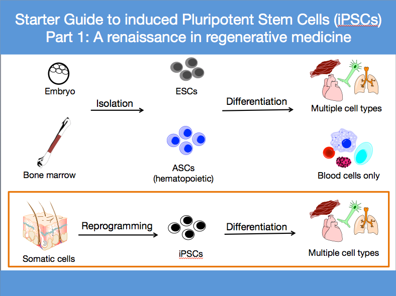 Starter Guide to iPSCs Visual Abstract.png