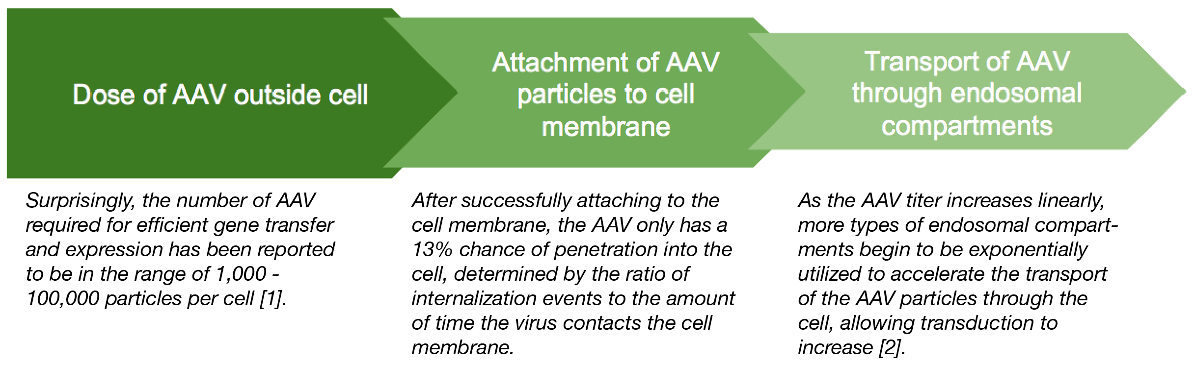 AAV Infection Flow Chart