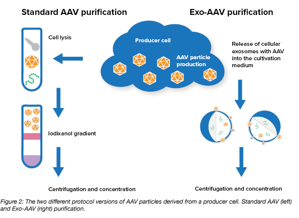 exosome AAV purification protocol