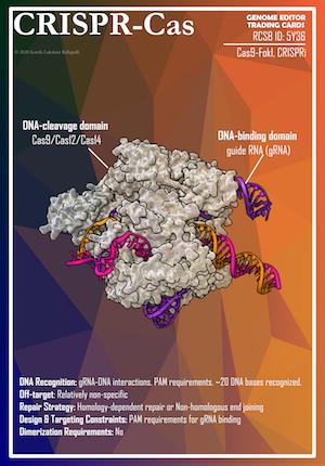 CRISPR Cas trading card