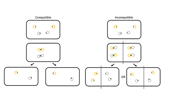 comparison of plasmid partitioning between compatible and incompatible plasmids