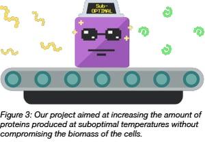 protein folding at suboptimal temperatures