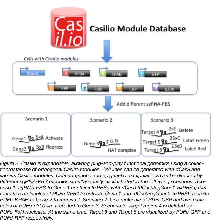 Casilio Module Database