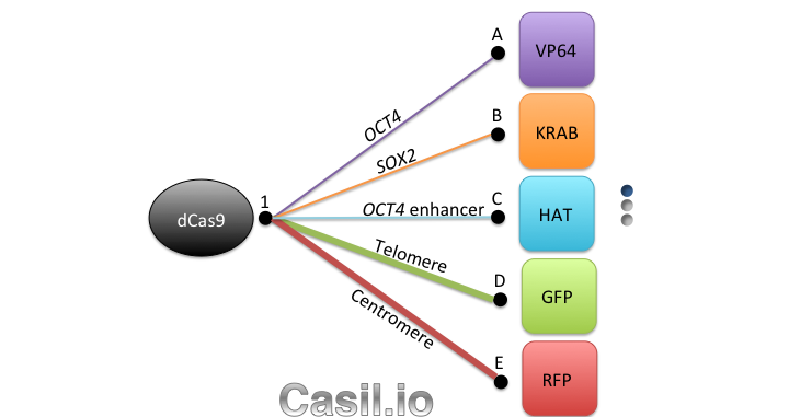 Casilio Overview