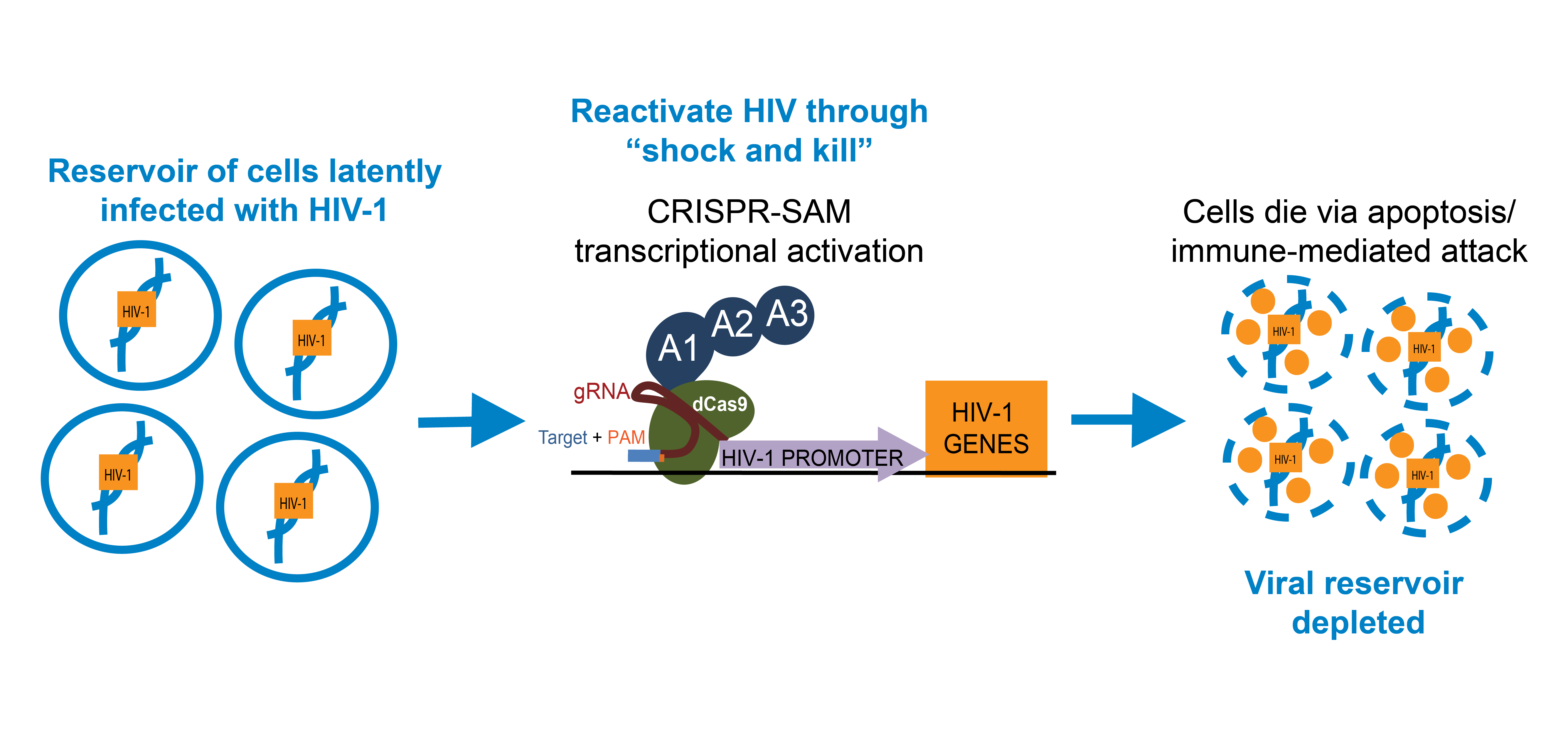 Using Shock and Kill to Fight HIV-1