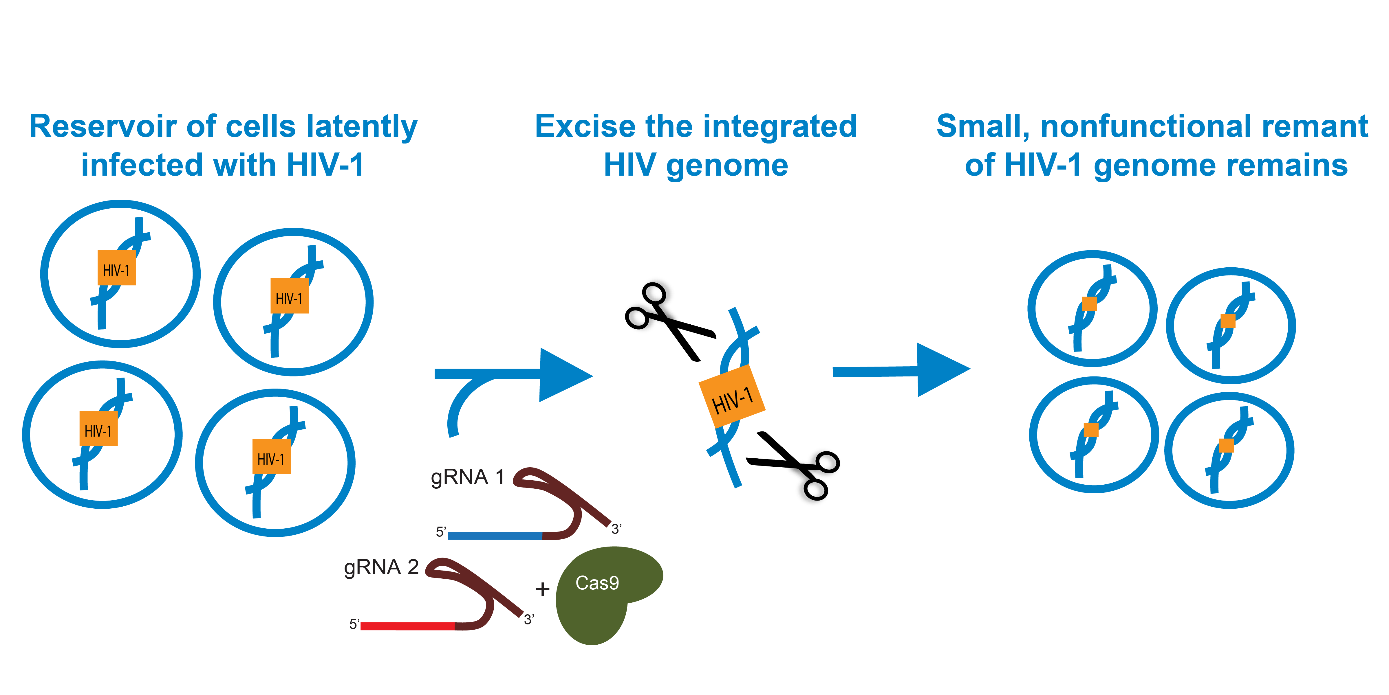 Cutting HIV-1 Out of the Genome with CRISPR