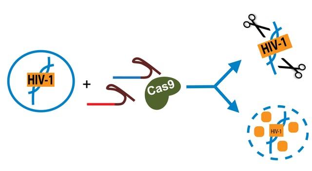 CRISPR HIV