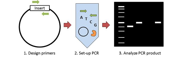 Colony PCR Overview