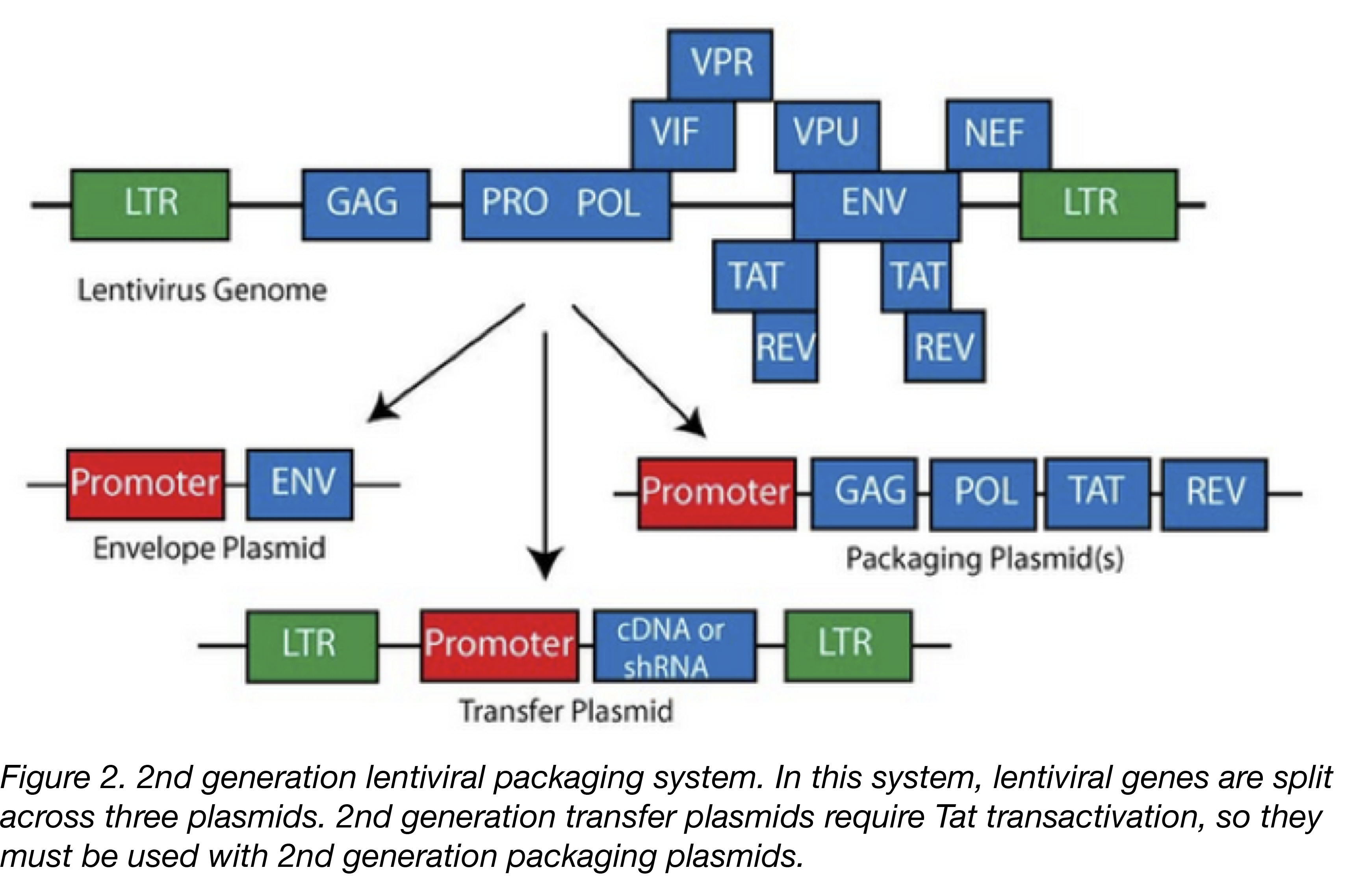Second generation lentiviral vectors