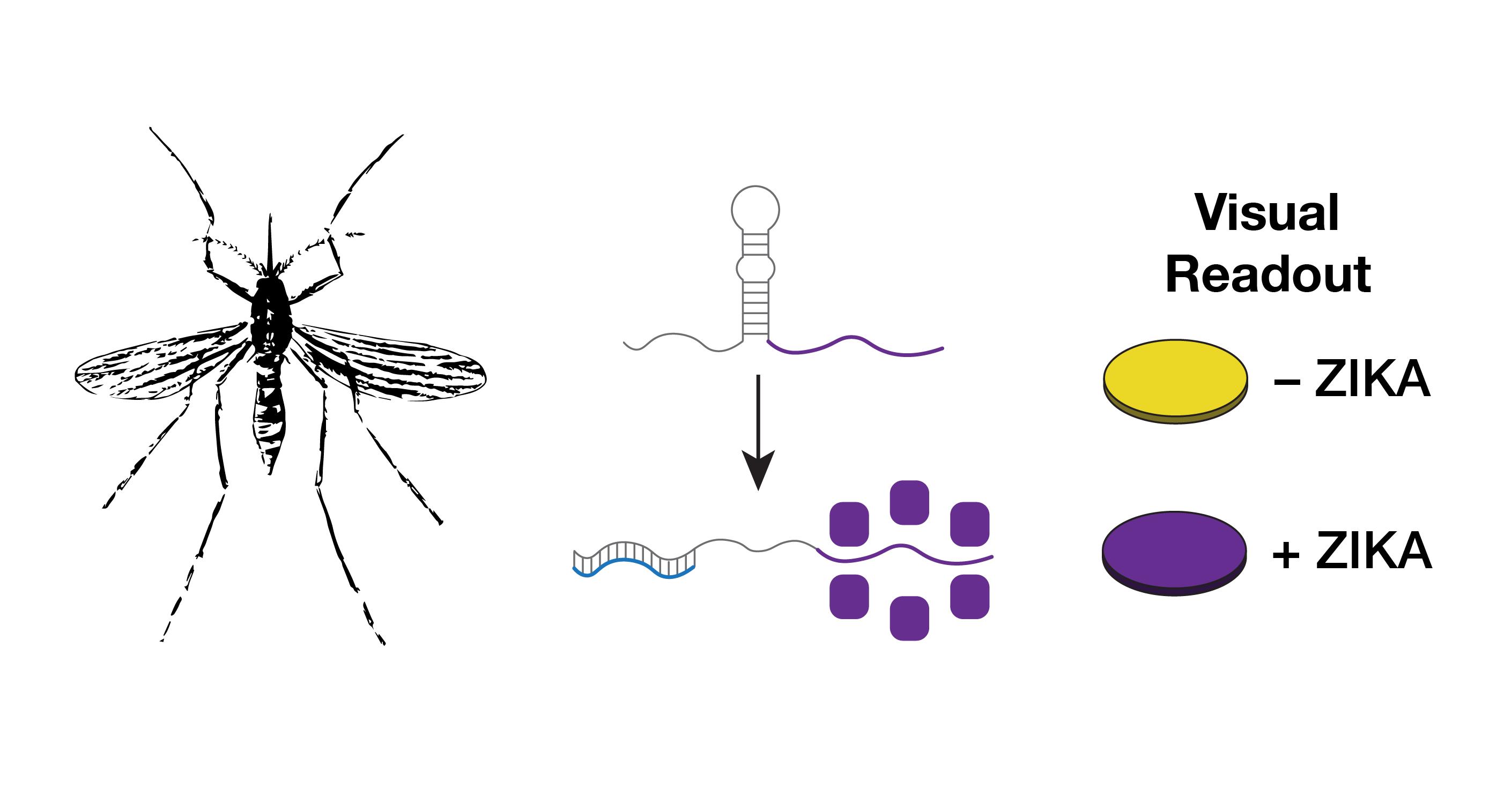 Zika Diagnostic Overview