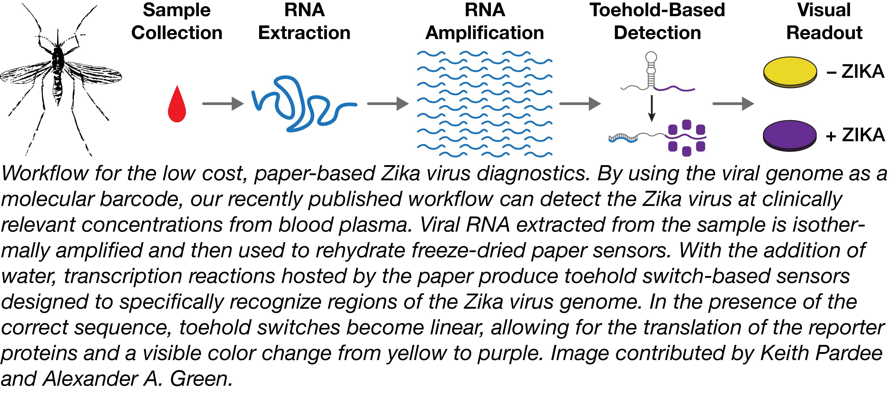 Zika detection workflow