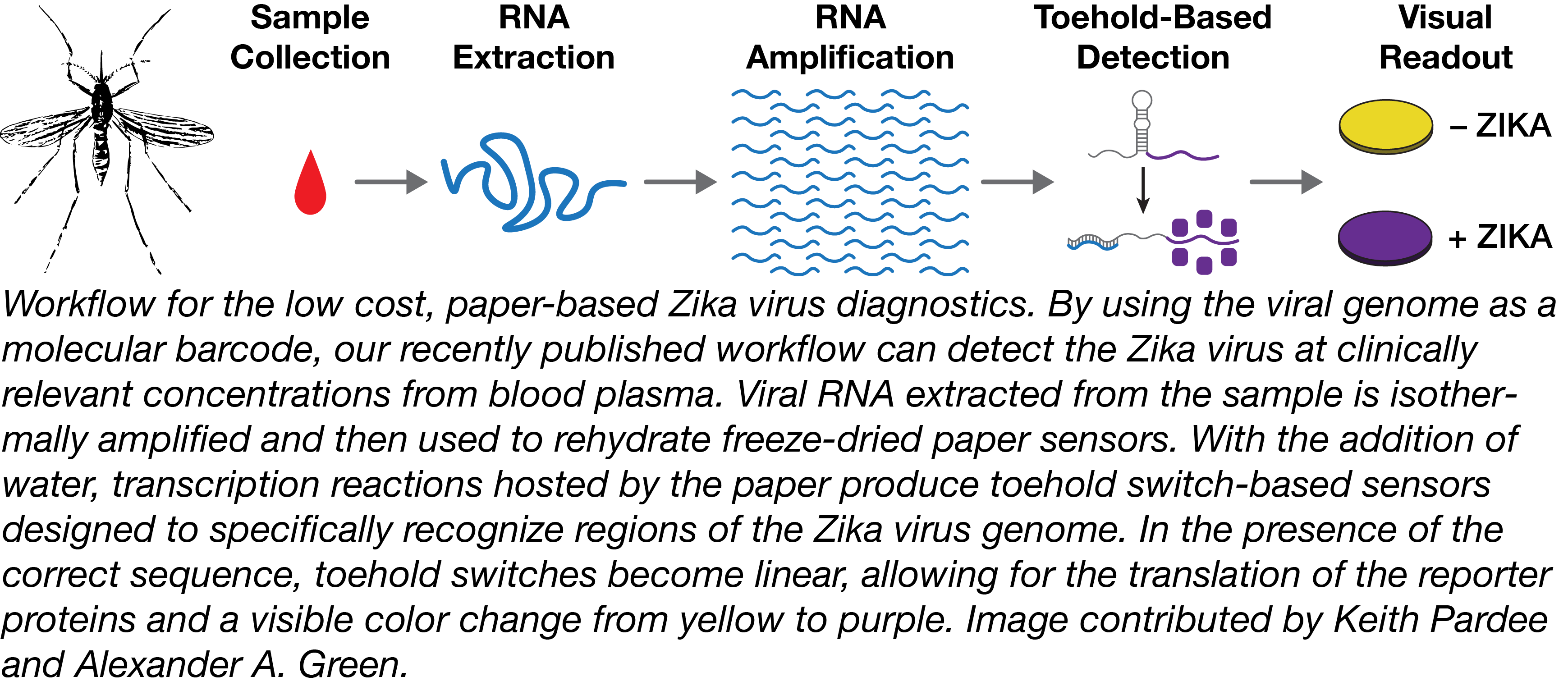 Zika detection workflow