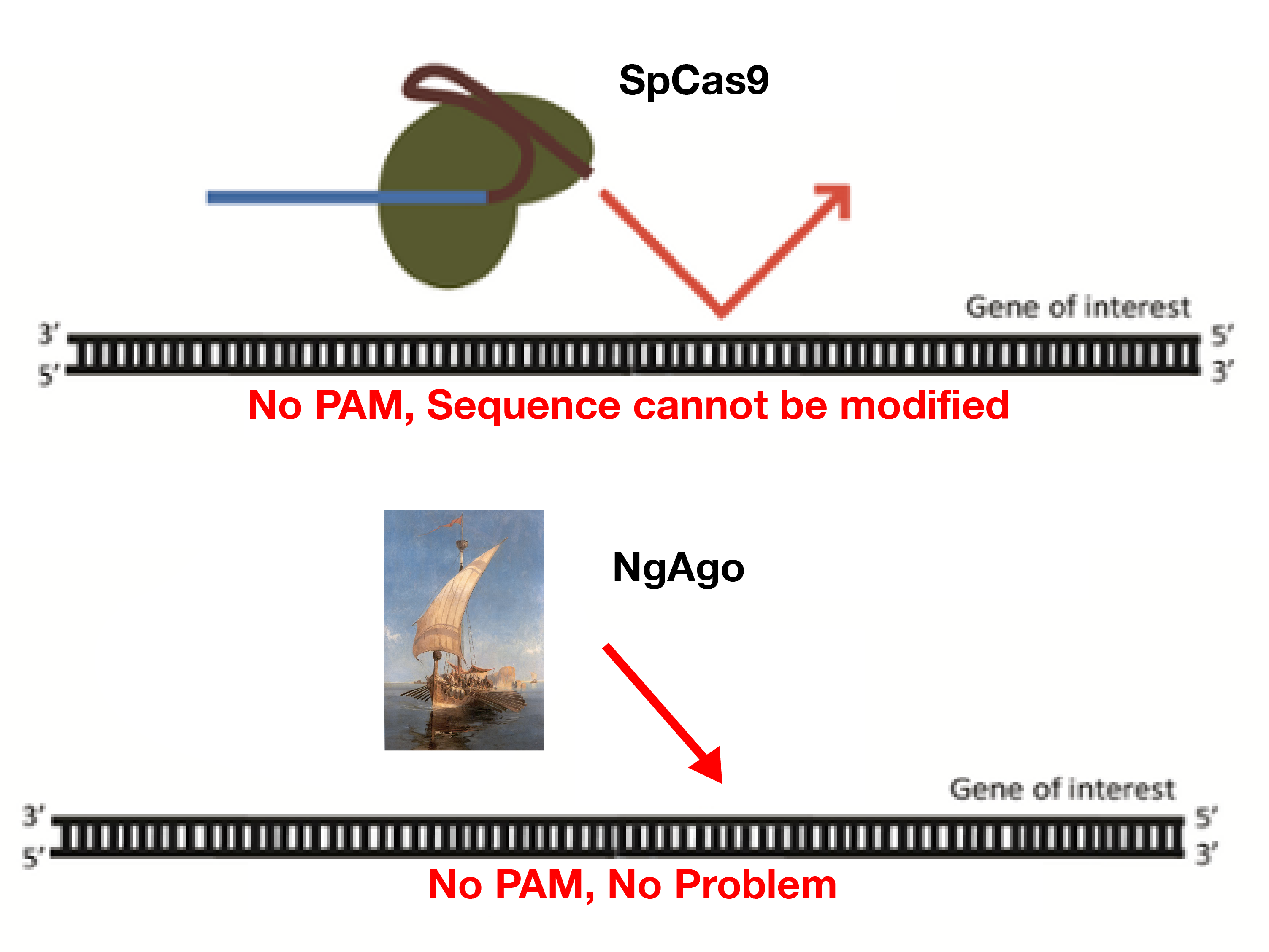 Cas9 PAM requirement