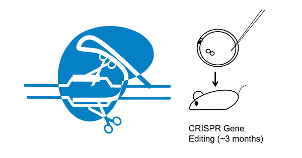 CRISPR mouse model