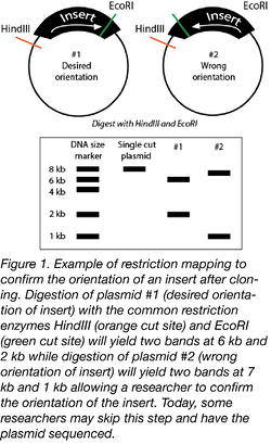 Restriction Mapping