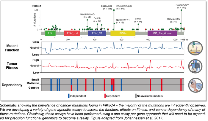 schematic showing the prevalence of cancer mutations found in PIK3CA