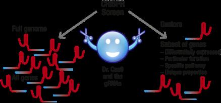 Custom CRISPR Scren Schematic.png