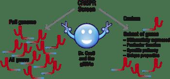 Custom vs. Full Genome CRISPR screen