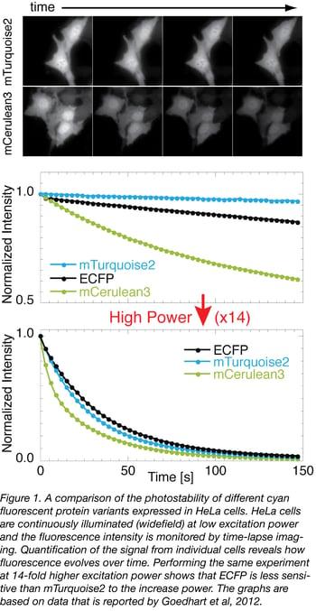 Photostability Figure 1