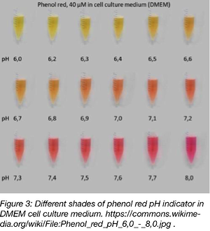 different shades of phenol red pH indicator in DMEM cell culture medium