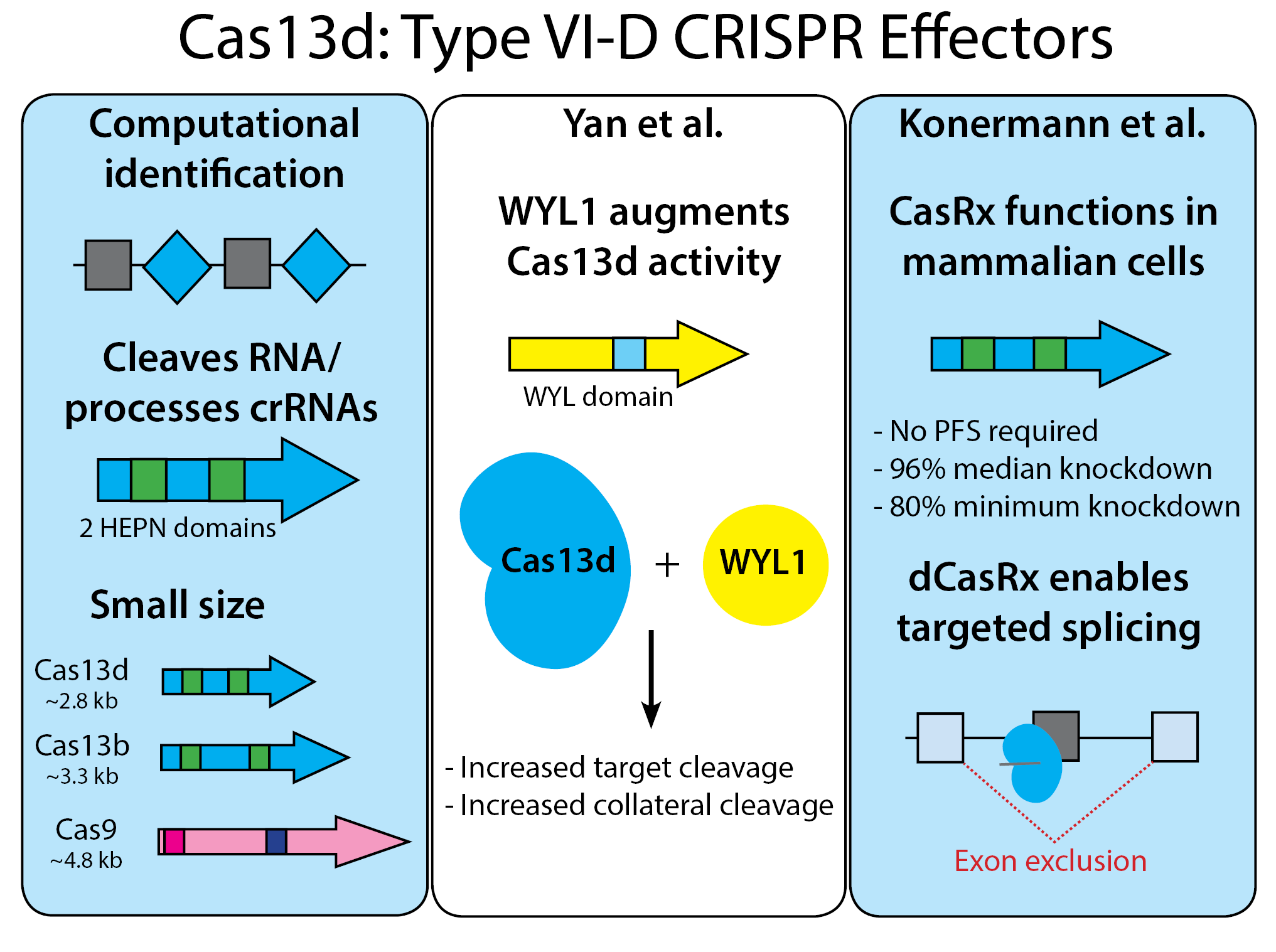 Schematic of Cas13d CRISPR effectors. The left of the graphic shows the small size of Cas13d at 2.8 kb, compared to Cas13b at 3.3 kb, and Cas9 at 4.8 kb. The Yan et al. paper describes Cas13d with the WYL1 domain to increase target cleavage and collateral cleavage. The Konermann et al. paper describes CasRx function in mammalian cells which does not require PFS, and results in 96% median knockdown and 80% minimum knockdown. dCasRx enables targeted splicing to exclude exons.
