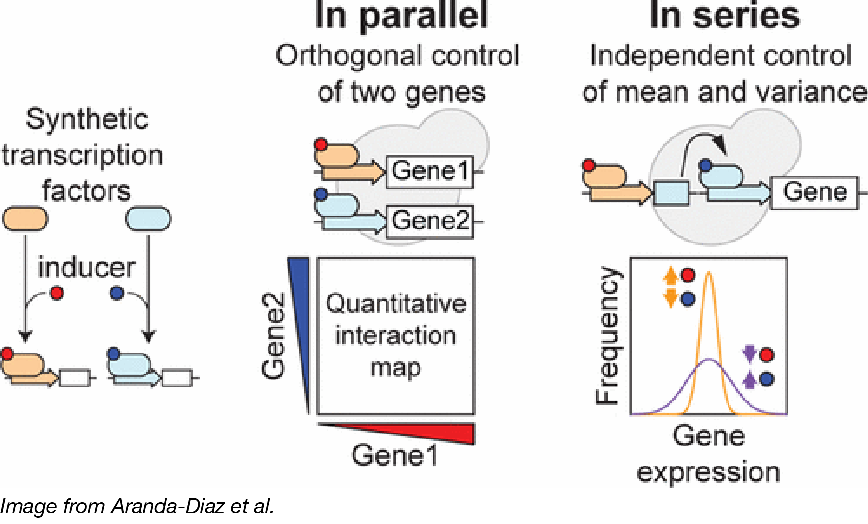 Independent Control of Gene Expression in Yeast Captioned-01