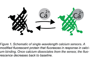 Calcium Sensors copy Captioned-01