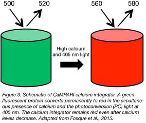 CaMPARI calcium sensor