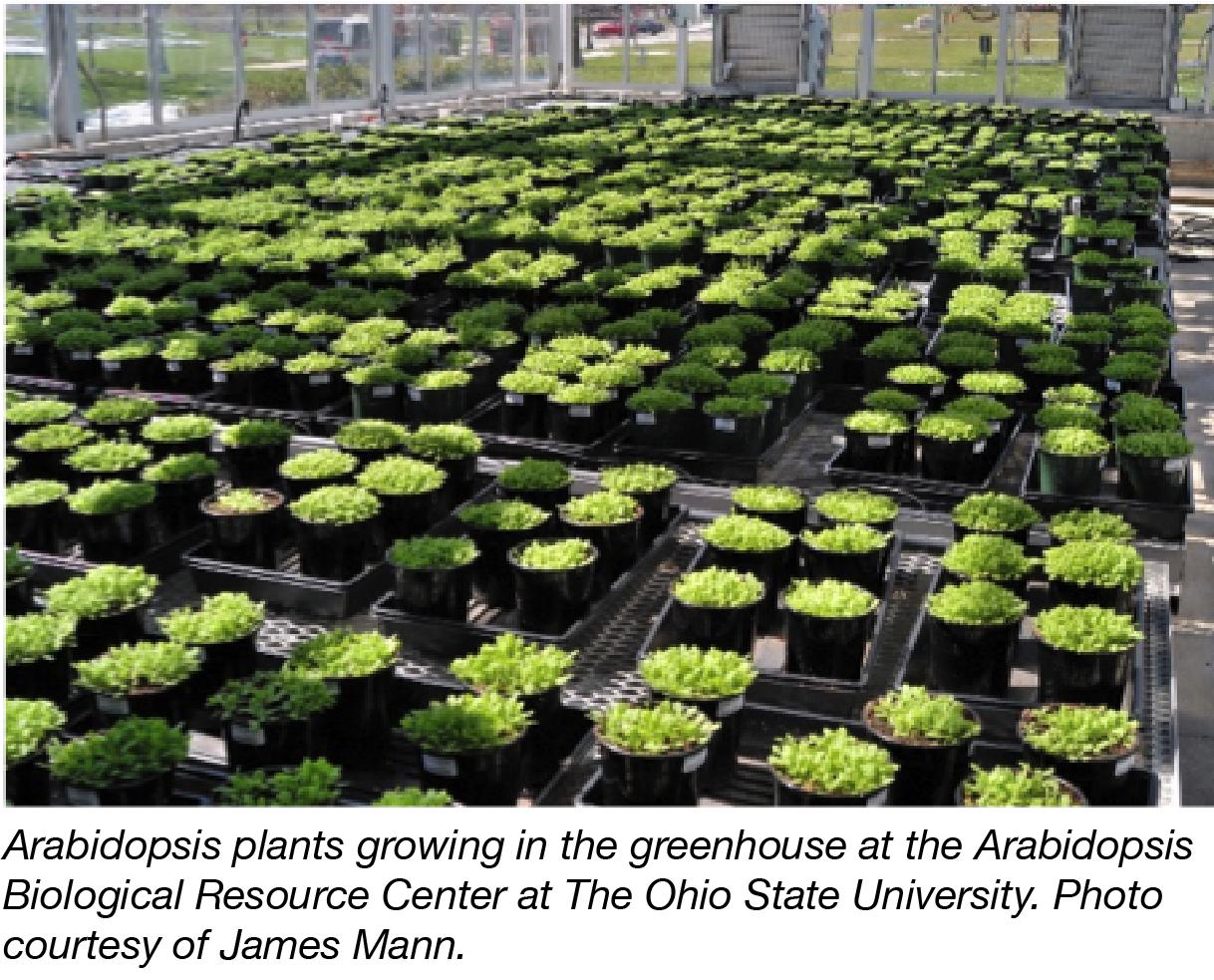 Arabidopsis Growing-01