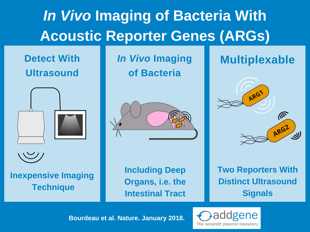 Acoustic reporter genes graphical abstract