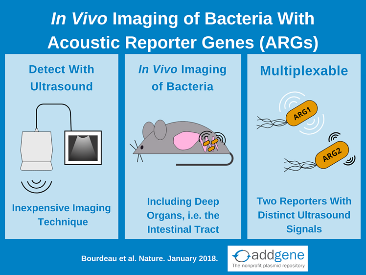 Acoustic reporter genes for in vivo imaging of bacteria