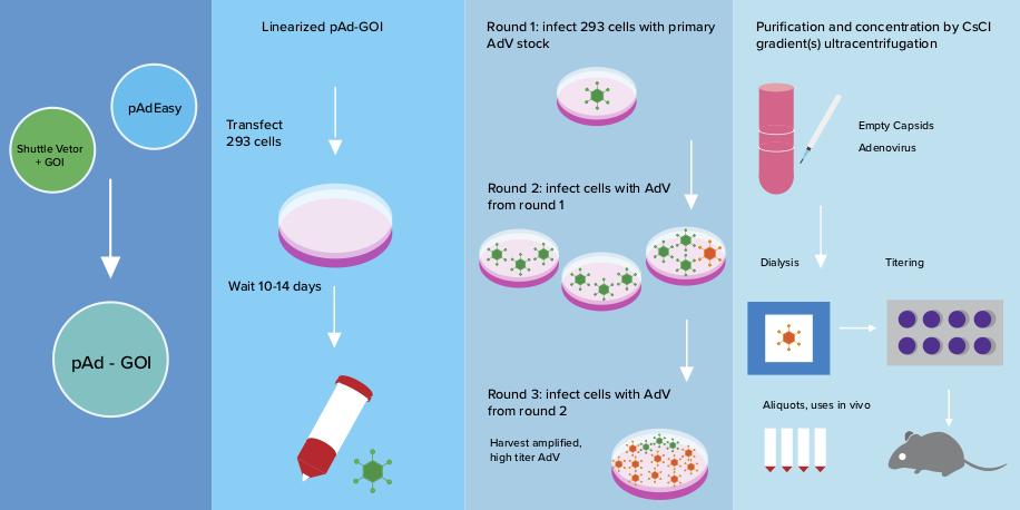 Adenovirus production