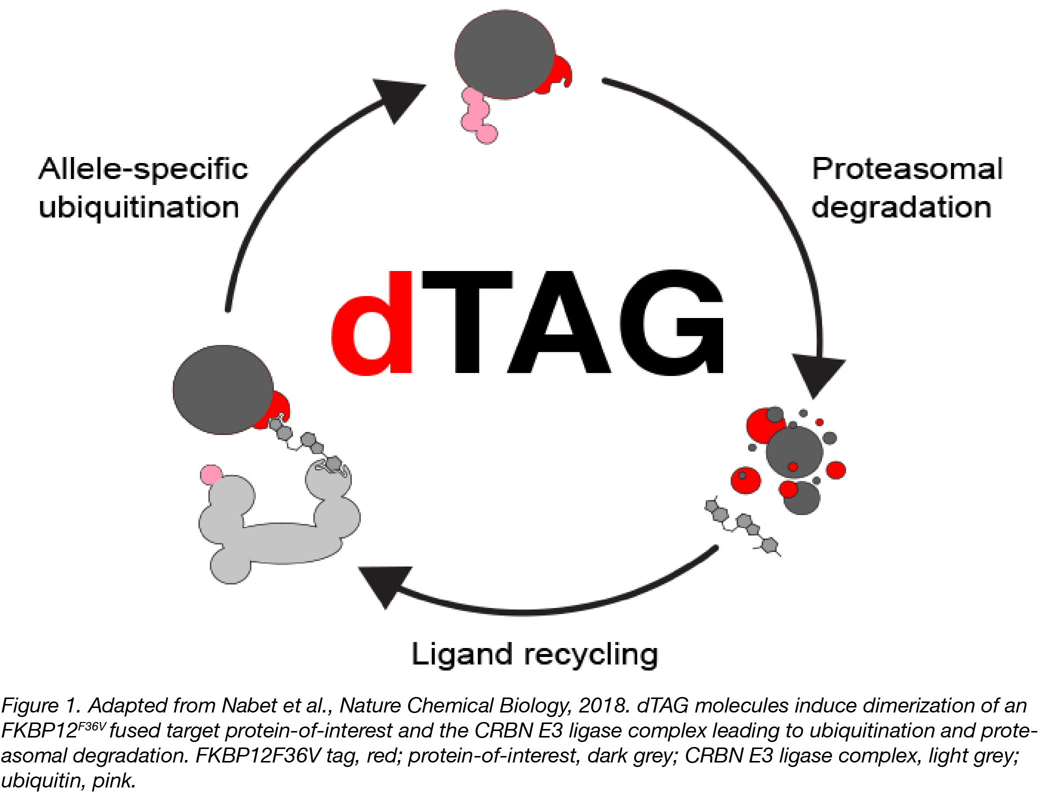 dTAG Figure 1 Captioned2-01