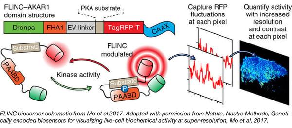 FLINC Biosensors Captioned-01