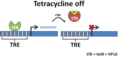 Tetracycline Off System Schematic