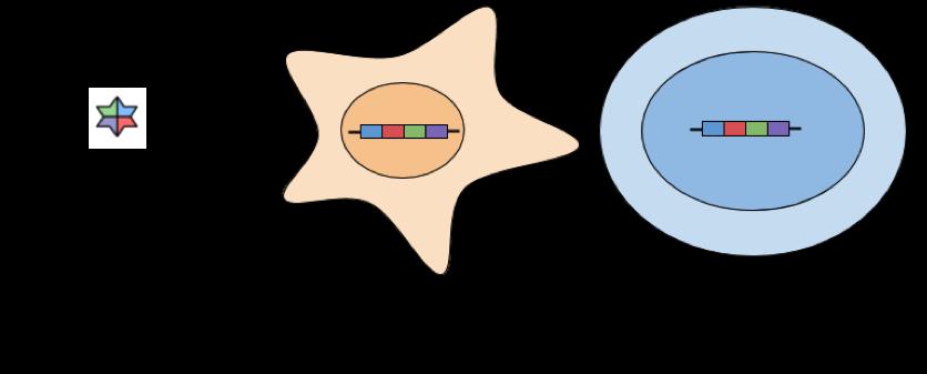 Lentivirus iPSC Generation