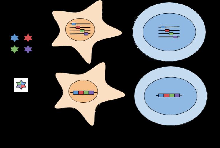 Retroviral iPSC generation
