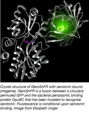 crystal structure of serotonin sensor iSeroSnFR