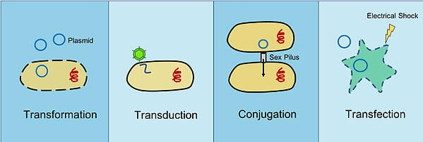 transformation, transduction, conjugation, and transfection comparison