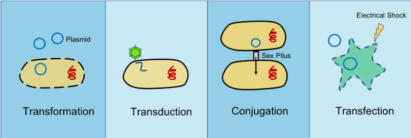transformation transduction conjugation transfection
