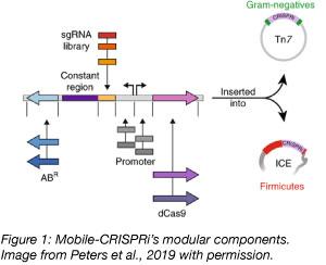 Mobile CRISPRi modular components