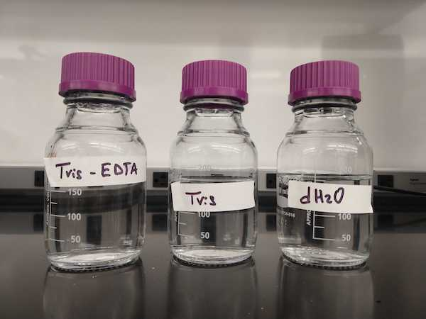 Three bottles with purple lids in a row. Bottles are labelled Tris-EDTA, Tris, and dH2O.