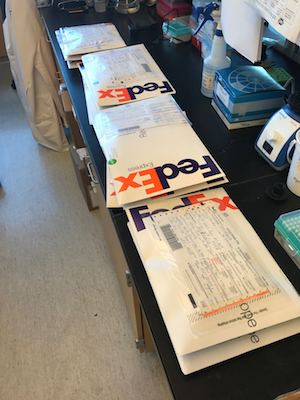 Stacks of FedEx envelope packages sitting on a lab bench