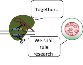 CRISPR-AAV