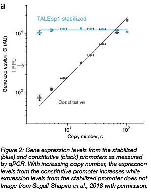 gene expression levels from stabilized promoters compared to constitutive promoters at different copy numbers