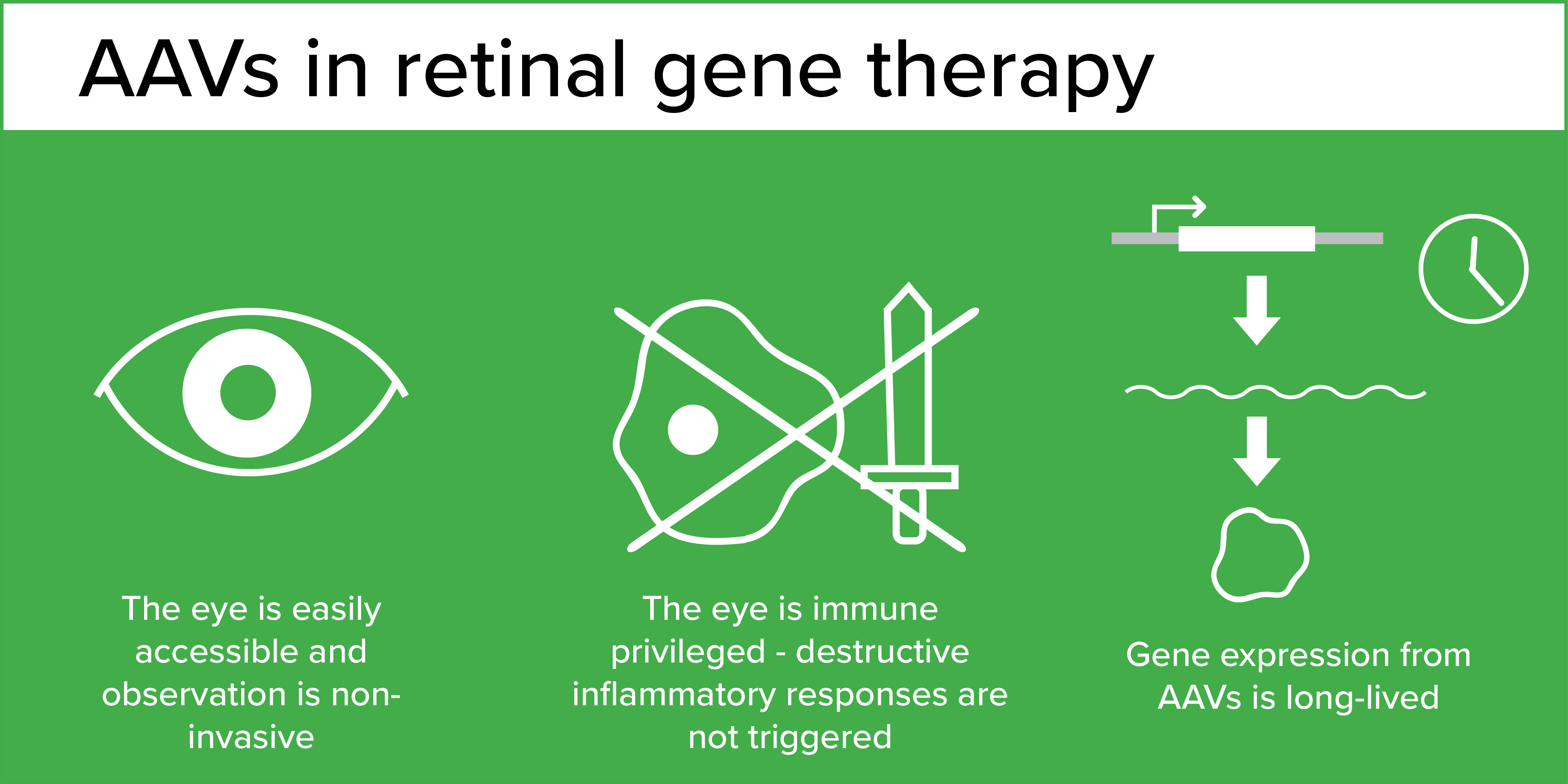 AAVs in retinal gene therapy infographic