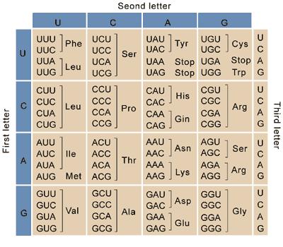 Codon Chart