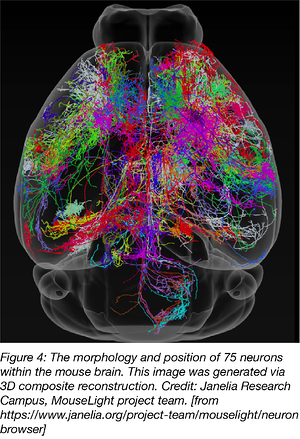 morphology and position of 75 neurons within the mouse brain
