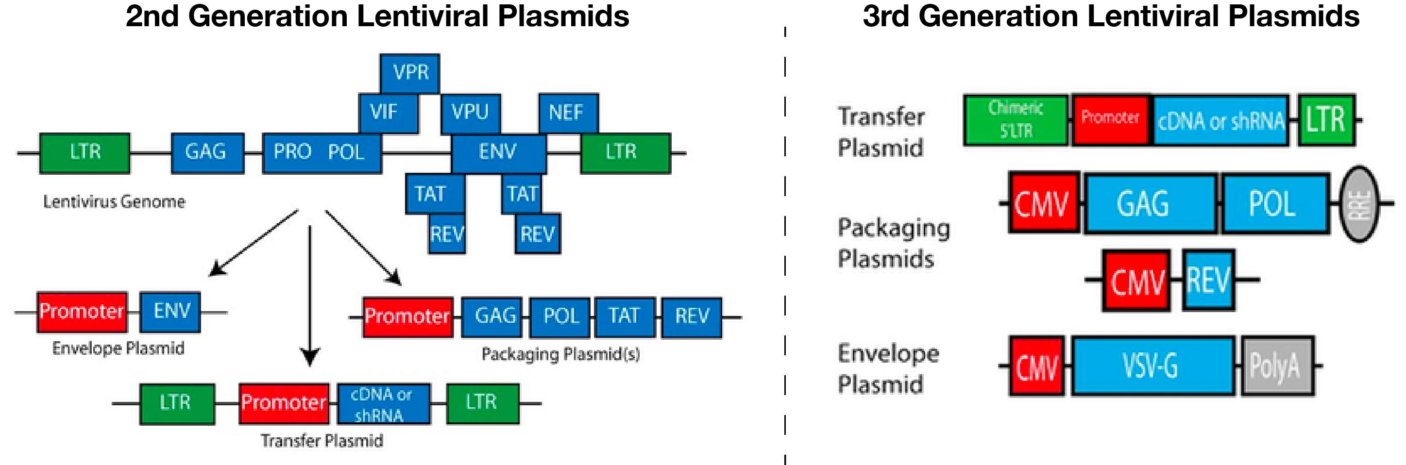 2nd and 3rd Generation Lentiviral Plasmids